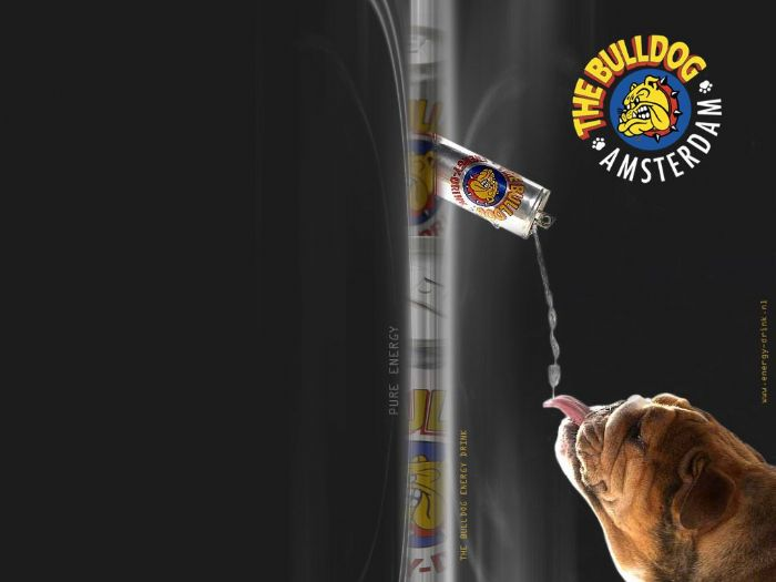 Bulldog Energy Drink: The Bulldog Energy Drink Wallpaper #1 - 1024x768